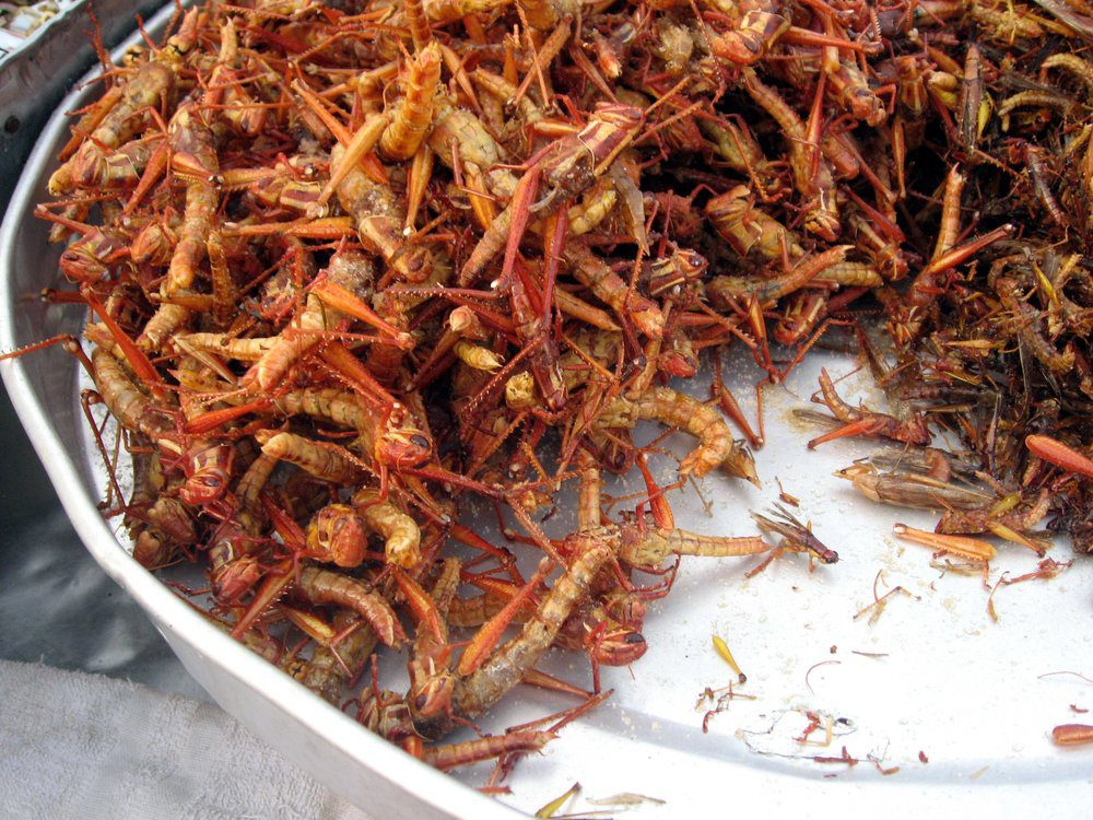 fried_grasshoppers_in_bangkok-1
