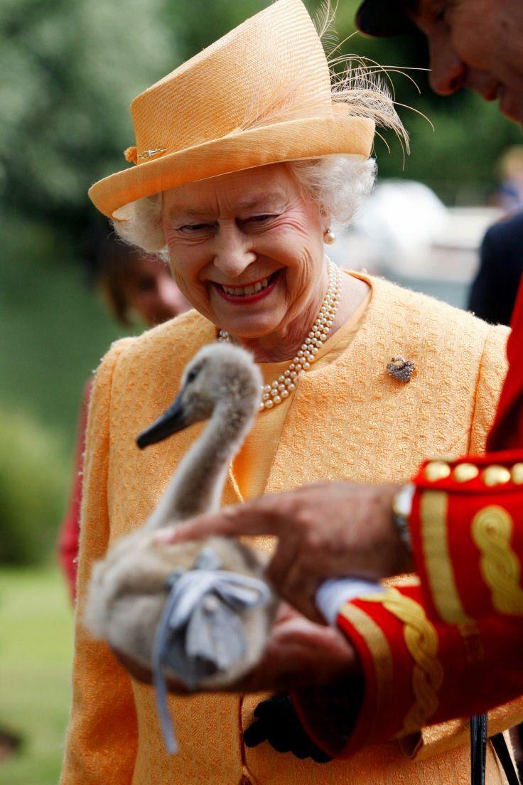 queen-elizabeth-ii-shown-orphaned-cygnet